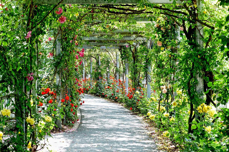 Flowers, Arches, Passage, Park, Gang, Path, Sunny