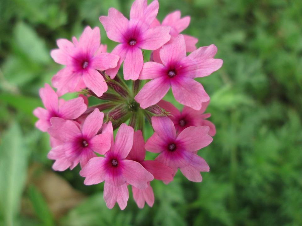 Park, Flower, Garden, Plant, Pink