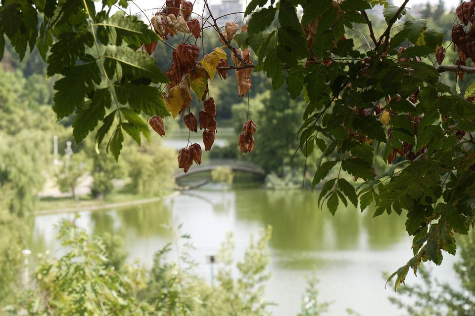 Landscape, Nature, Park, Trees, Plants, Leaves, Green