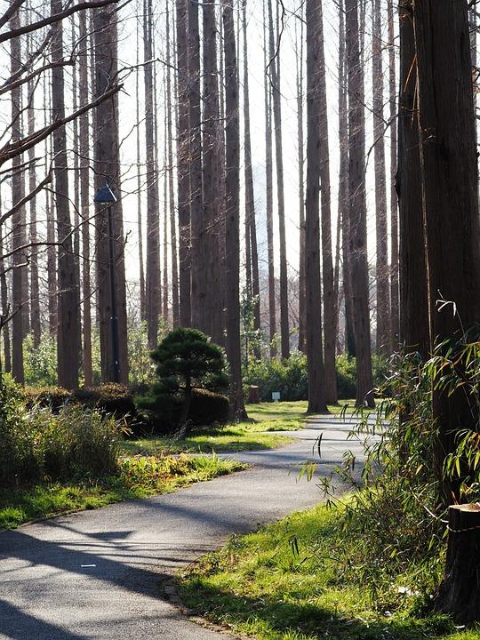 Wood, Forest, Woods, Park, Shadow, Natural, Landscape