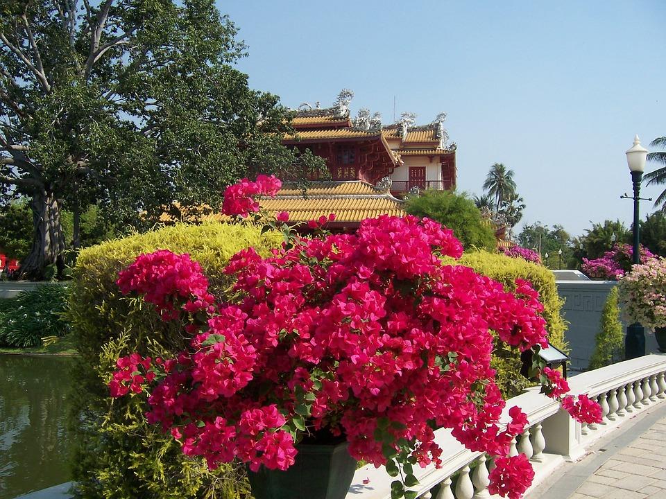 Flowers, Park, Thailand
