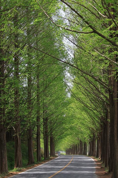 Nature, Wood, Leaf, Park, Landscape, The Leaves, Green