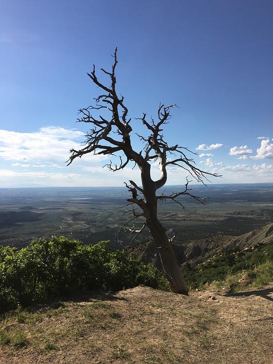 Mesa Verde, Colorado, Park, Cliff, Tree, Clouds, View