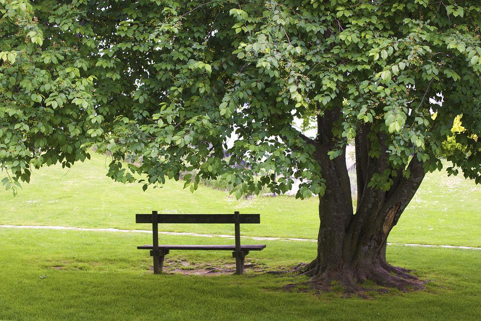 Bench, Tree, Grass, Park, Green, Empty