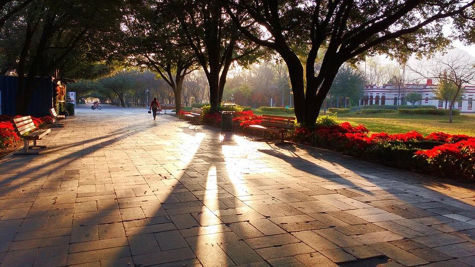 Park, Shadows, Tree, Fundidora Park, Mexico