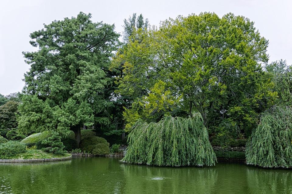 Tree, Nature, Park, Landscape, Wood, Pond, Waters