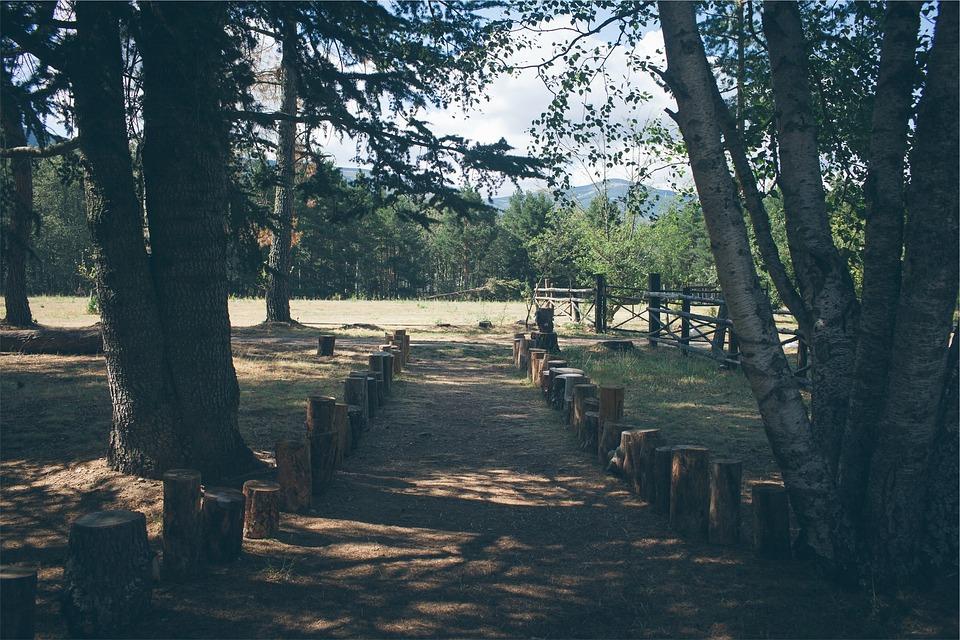 Park, Path, Trees, Tree Stumps