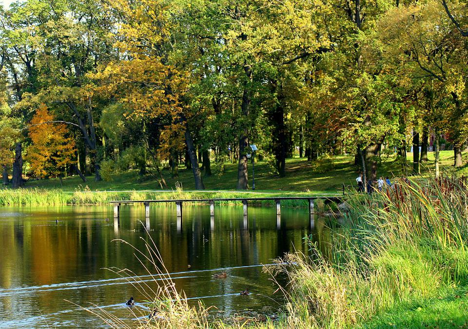 Park, Pond, Water, Landscape, Nature, Relaxation