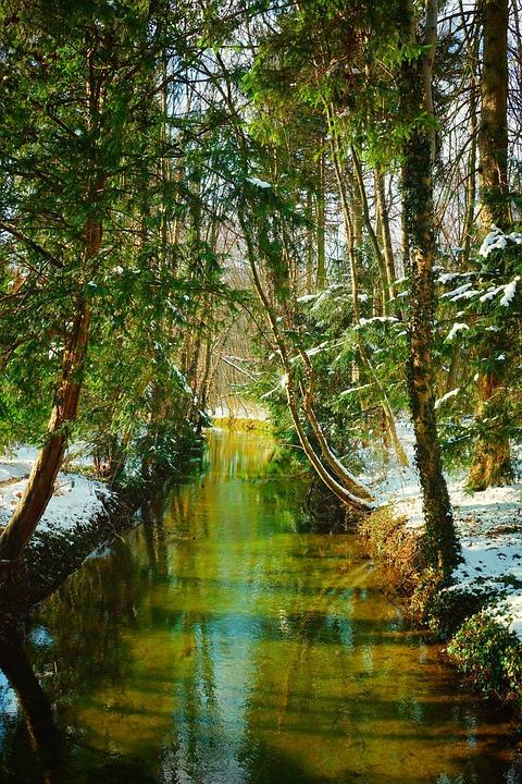 Nature, Wood, Tree, Waters, River, Park, Winter Sun