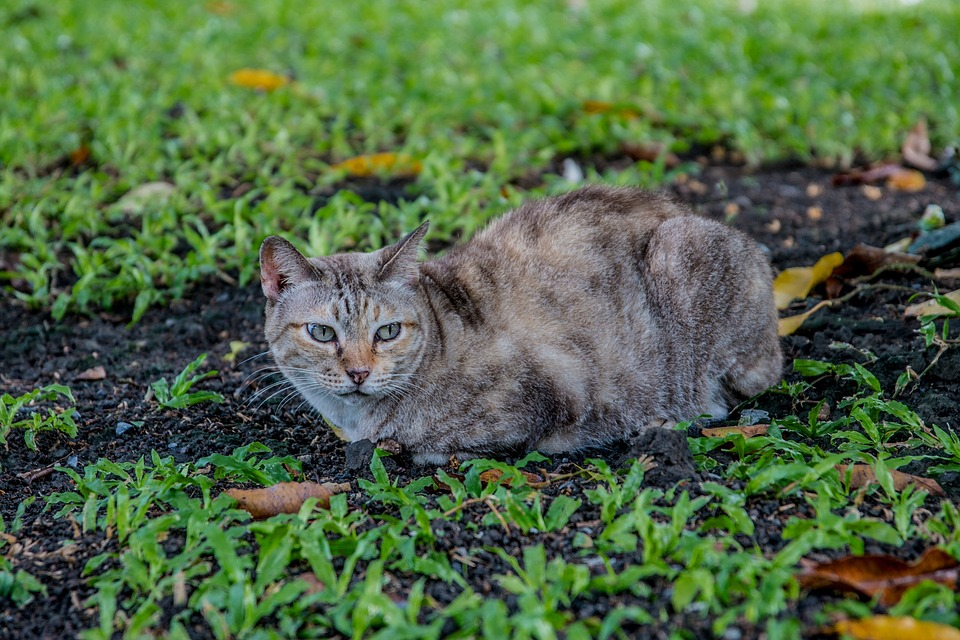 Cat, Cat Thailand, Parks