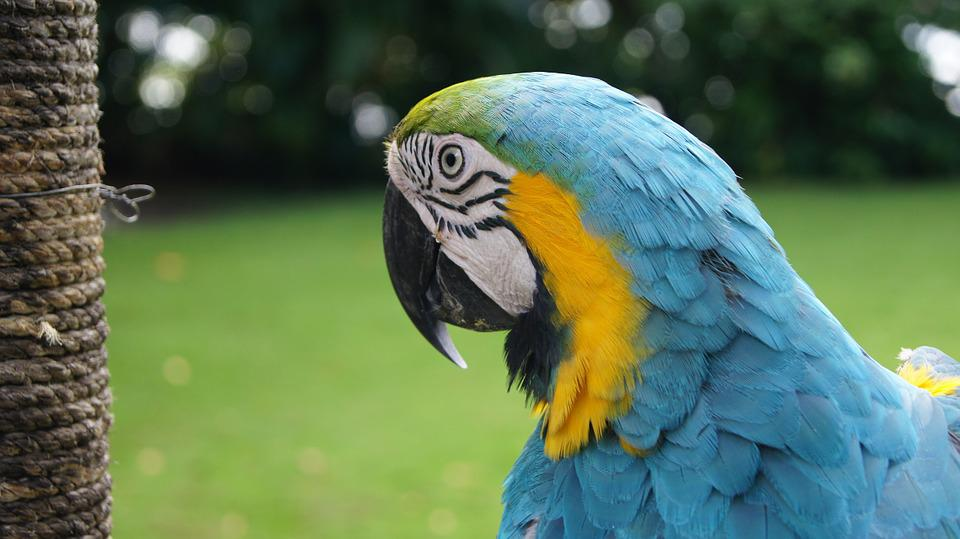 Parrot, Bird, Ara, Colorful, Animal, Tropical, Nature