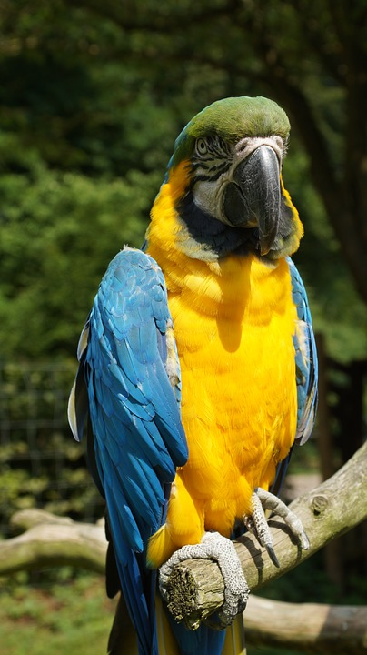 Parrot, Ara, Bird, Colorful, Yellow Macaw