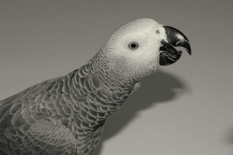 Parrot, Beak, Plumage, Bird, Eye, Feathers