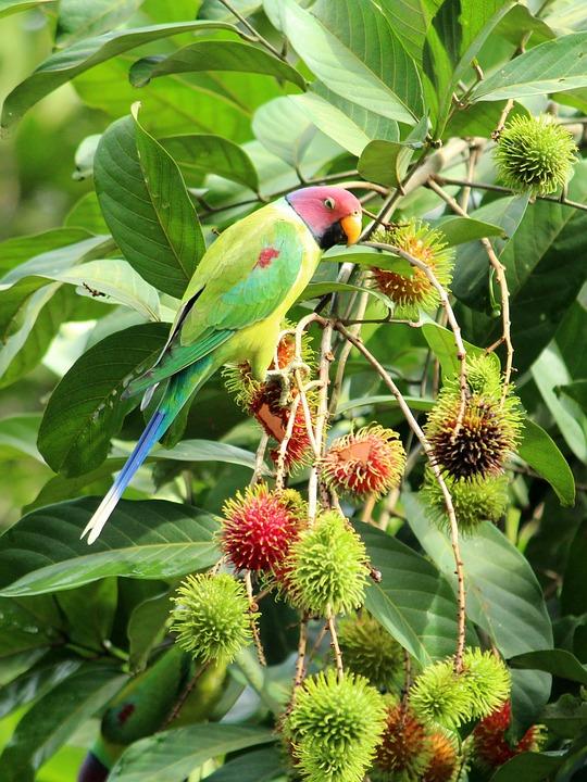 Parrot, Parakeet, Bird, Plumage, Cute, Nature, Green