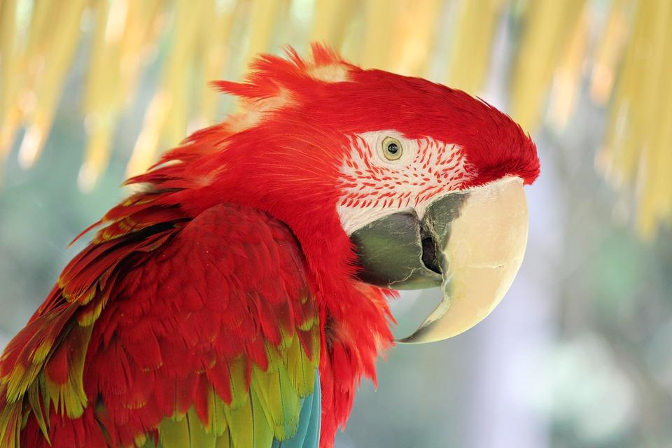 Bird, Feather, Wildlife, Nature, Parrot