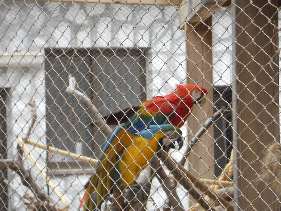 Parrot, Parrot In Cage, Birds
