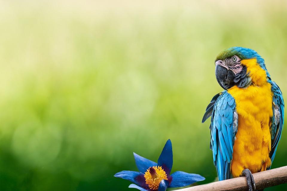 Parrot, Bird, Beak, Feathers, Plumage, Flower, Branch