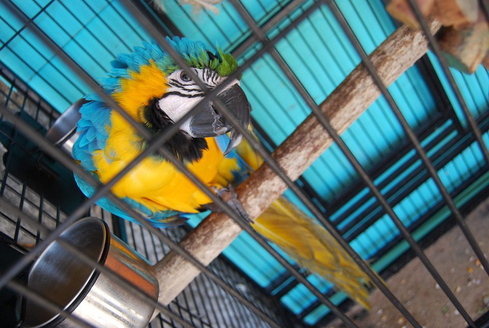 Parrot, Cage, Birdcage, Bird, Caged, Domestic, Pet
