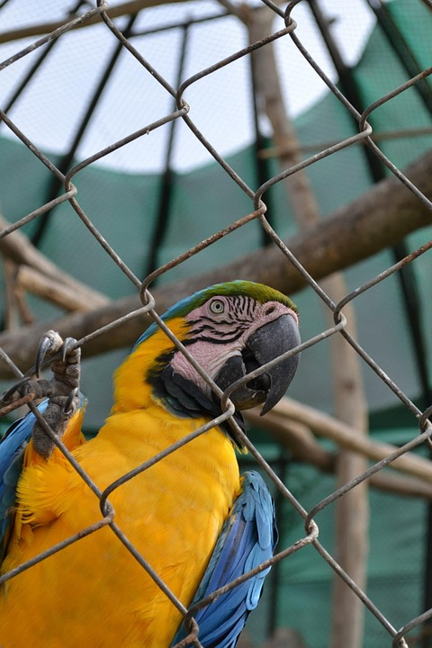 Macaw, Parrot, Exotic Bird, Cage, Zoo