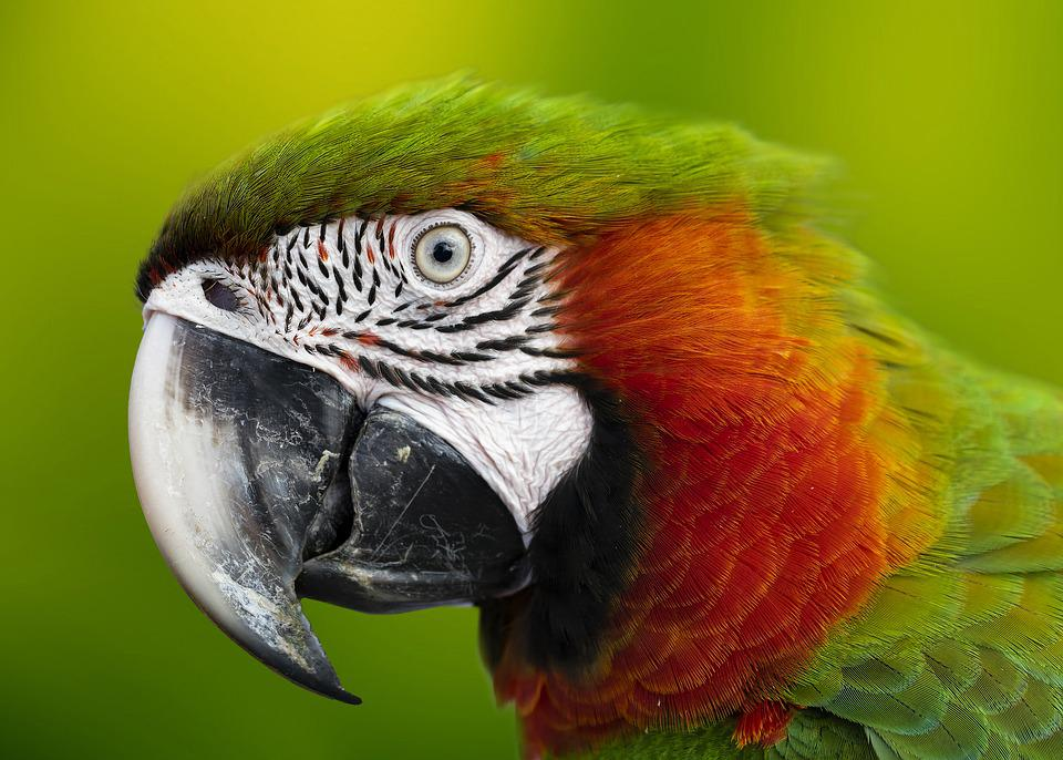 Macaw, Colorful, Parrot, Animals, Exotic, Ave, Plumage