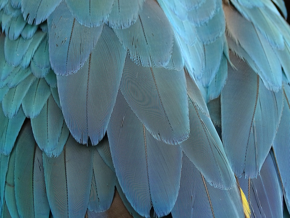 Feather, Plumage, Blue, Parrot, Bird Feathers, Bird