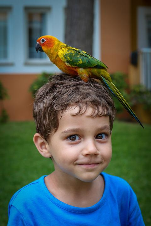 Parrot, Boy, Majorca, Birds, Child, Feathers, Nature