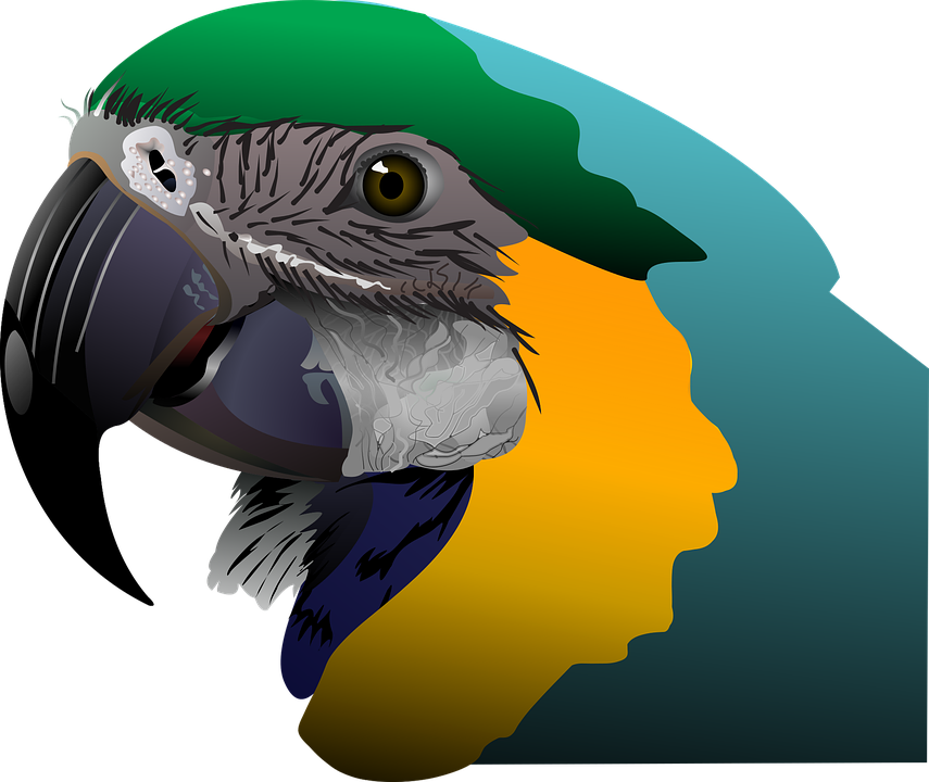 Parrot, Tropical, Bird, Exotic, Jungle, Wildlife