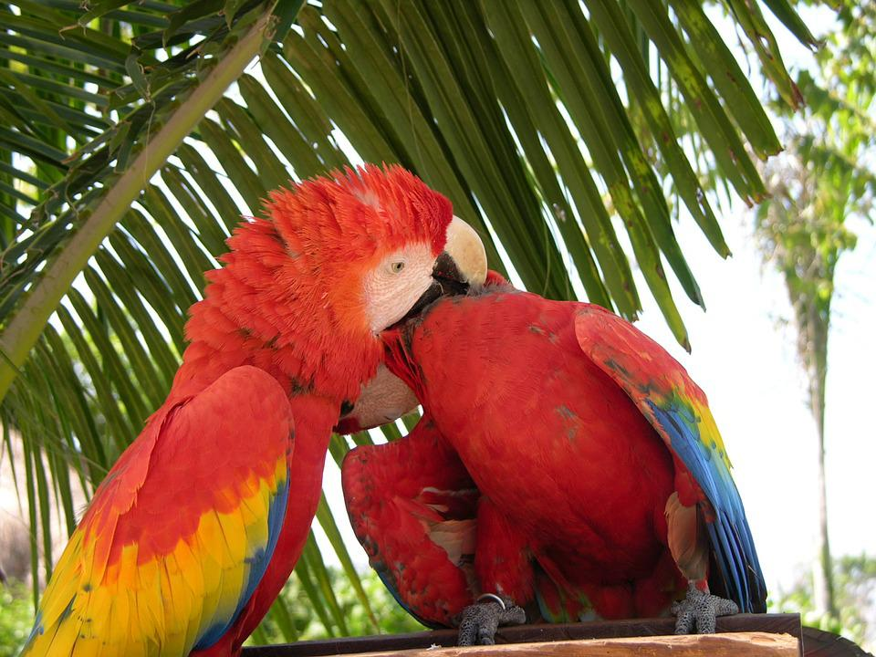Parrot, Love, Birds, Zoo, Couple, Colorful