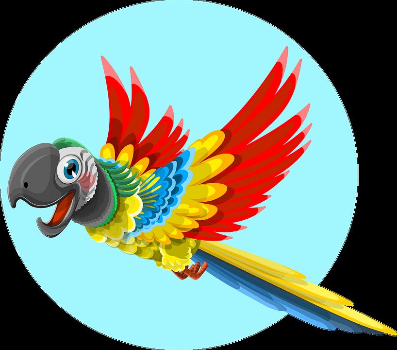 Parrot, Animal, Bird, Wild, Ara, Feather, Tropical