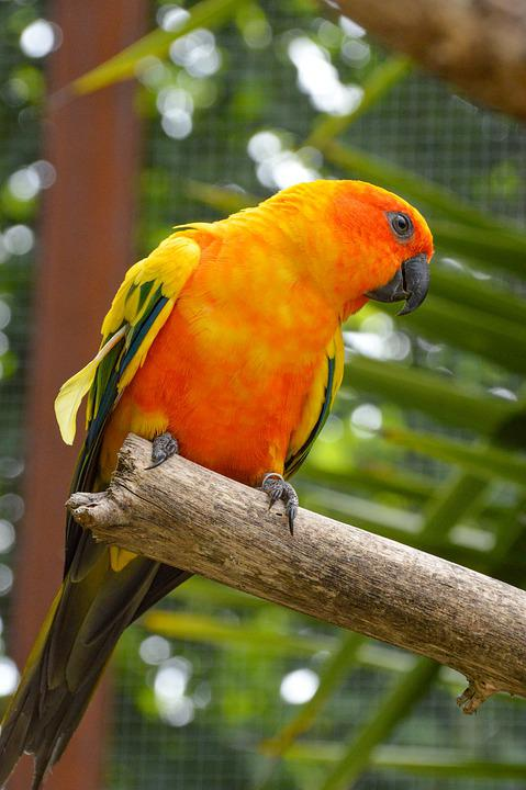 Conure, Bird, Parrot, Yellow, Colorful, Exotic