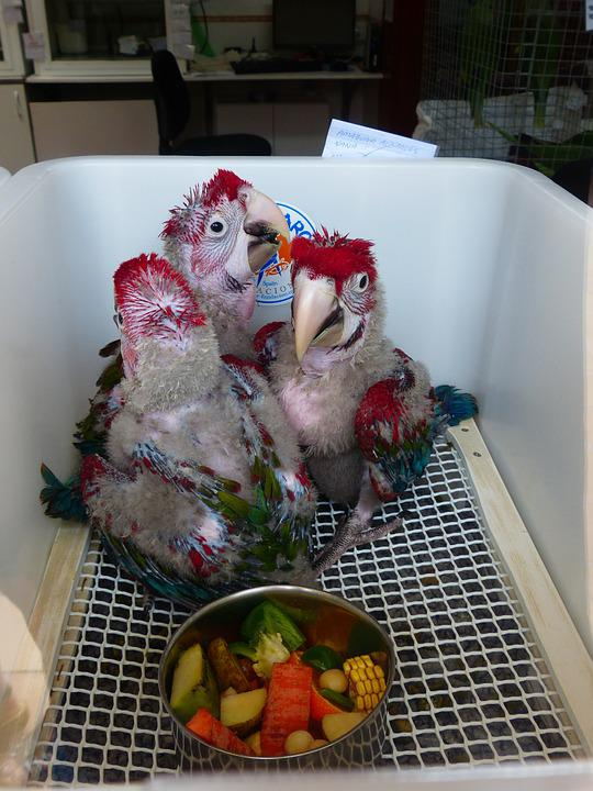 Parrots, Parrot Breeding, Parrot Breeding Station
