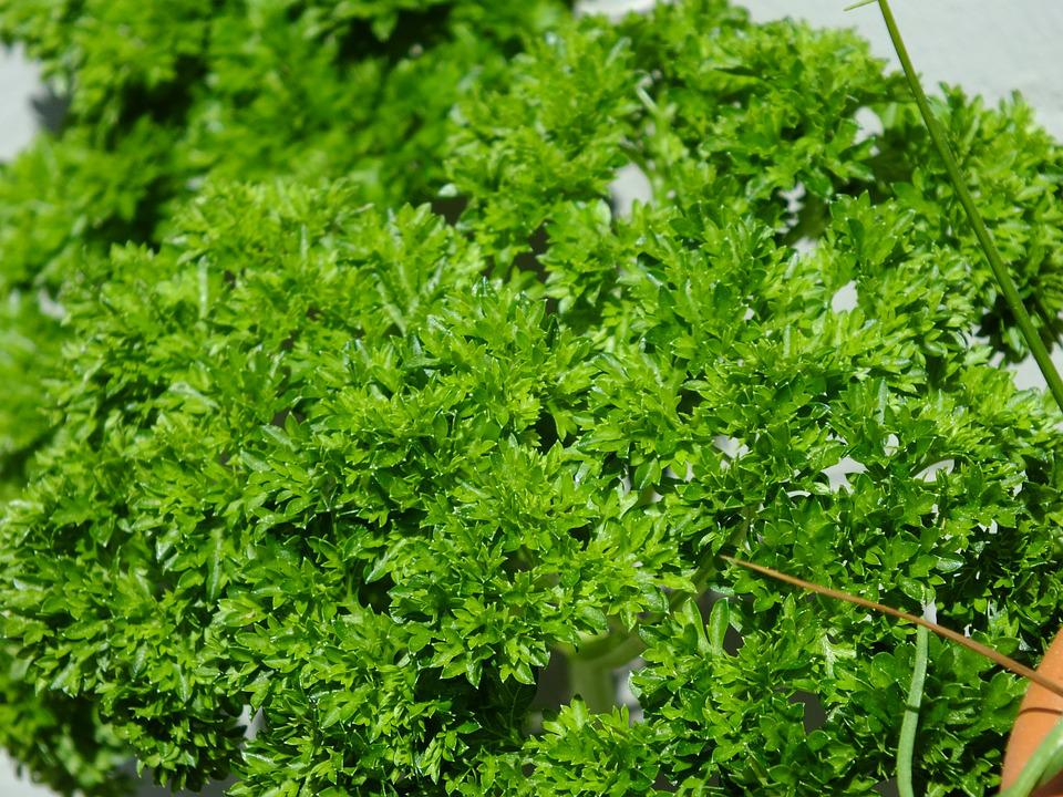 Parsley, Herbs, Plant, Spice, Green, Kitchen Herb, Food