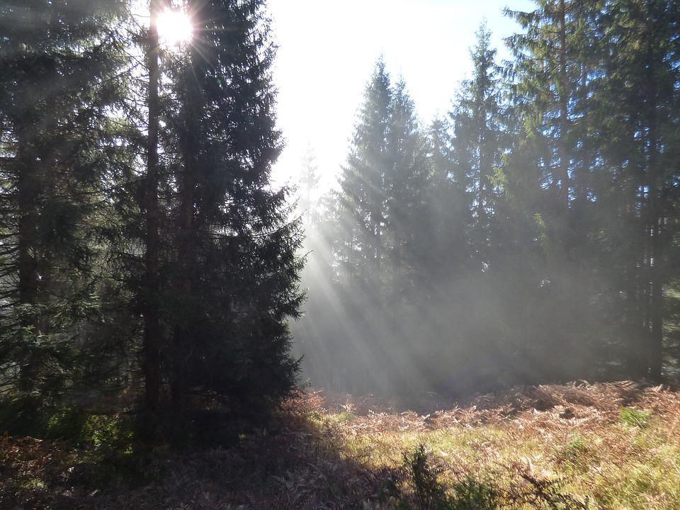 Autumn Forest, Passauer Hut, Leogang, Fod, Morning