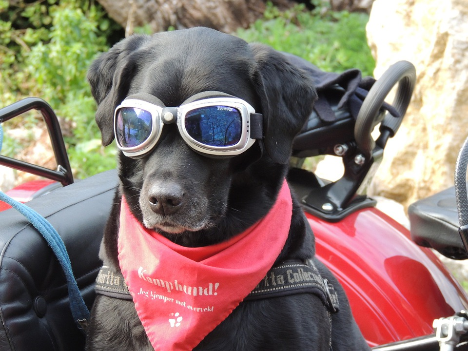 Dog, Sidecar, Sunglasses, Funny, Driver, Passenger