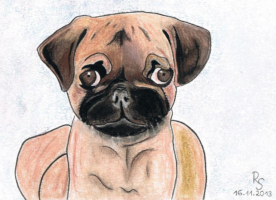 Pug, Dog, Drawing, Pastel, Charcoal Drawing