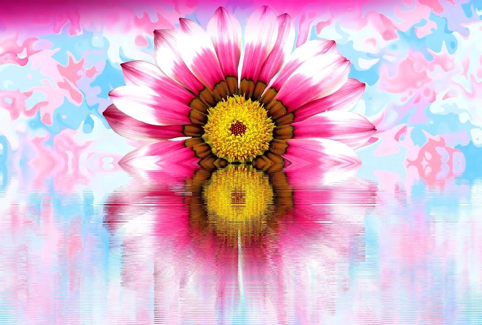 Blossom, Bloom, Flower, Nature, Pastel, Light Blue Pink