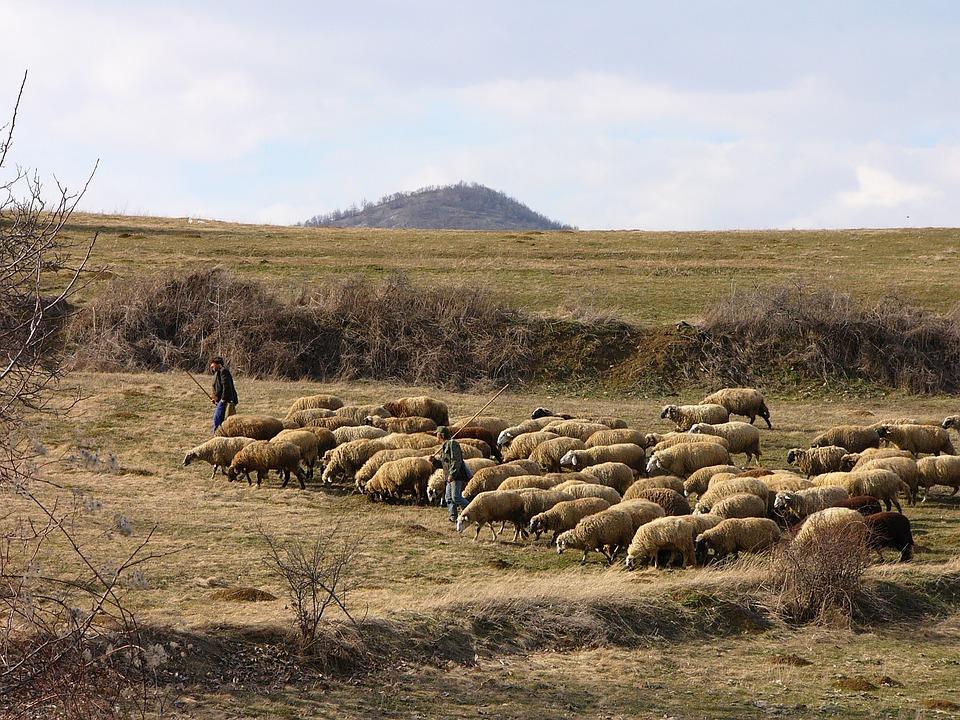 Bulgaria, Mountain, Sheep, Herd, Pastors, Shepherds