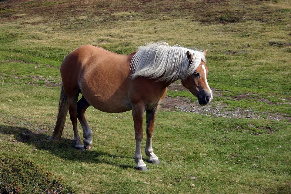 Horse, Animal, Nature, Pasture, Gallop, Mane, Brown