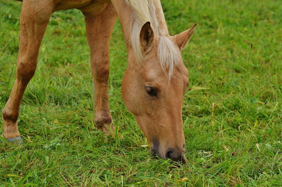 Horse, Pasture, Meadow, Graze, Animal World