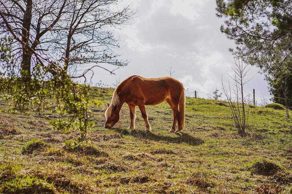 Horse, Brown Horse, Stallion, Pasture, Graze, Meadow
