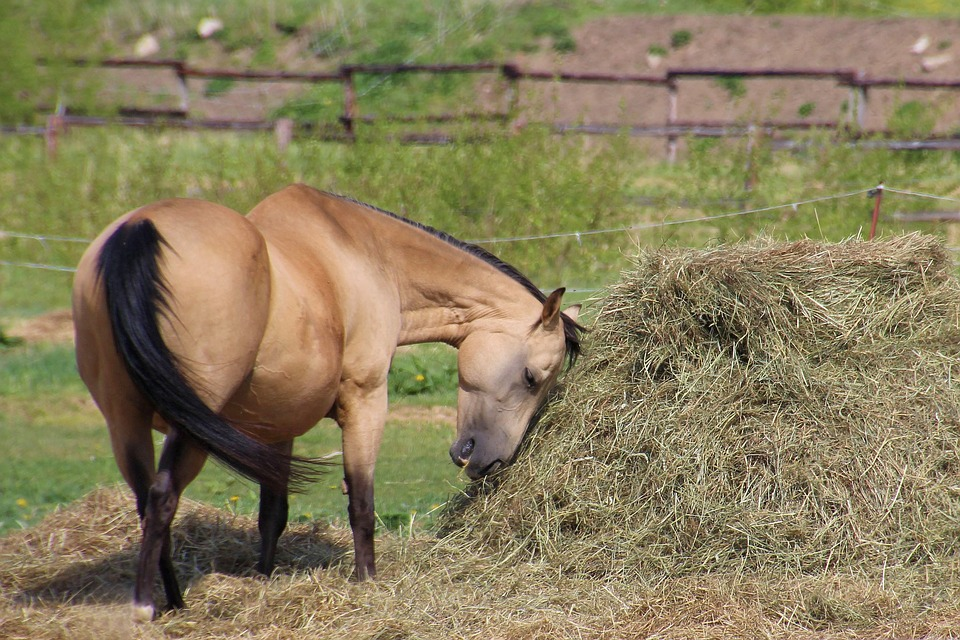 Horse, Pasture, Hay, Eat, Coupling