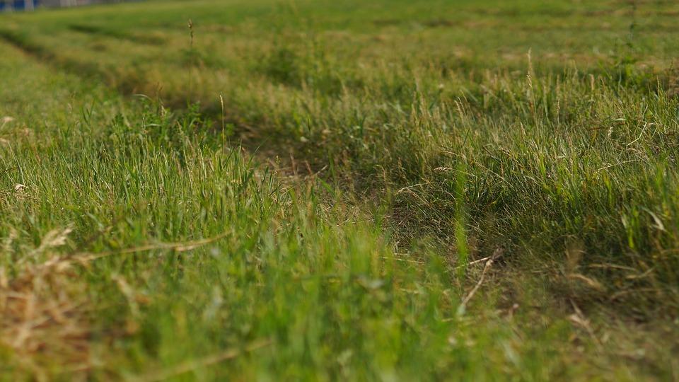 Field, Meadow, Grass, Grassland, Pasture, Landscape