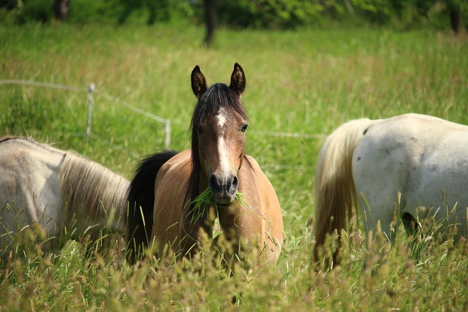 Horse, Pasture, Mold, Flock, Grass, Paddock, Coupling