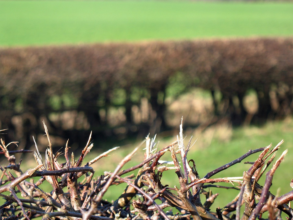 Hedge, Pasture, Grass, Bush, Fence, Nature