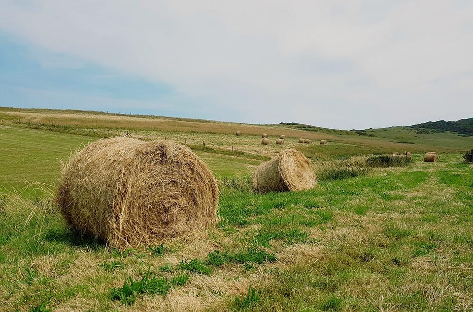 Hay Bales, Hay, Pasture, Meadow, Landscape, Agriculture