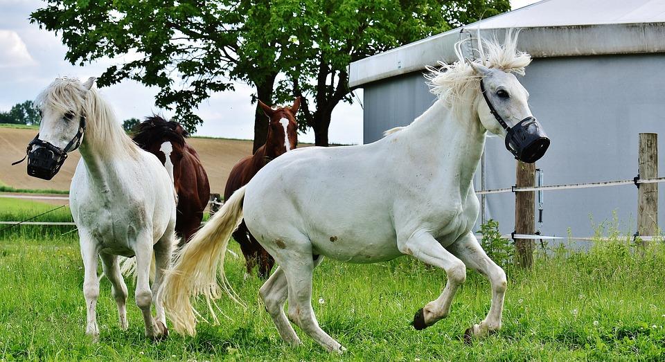 Mold, Horses, Romp, Wild, Play, Pasture, Animal