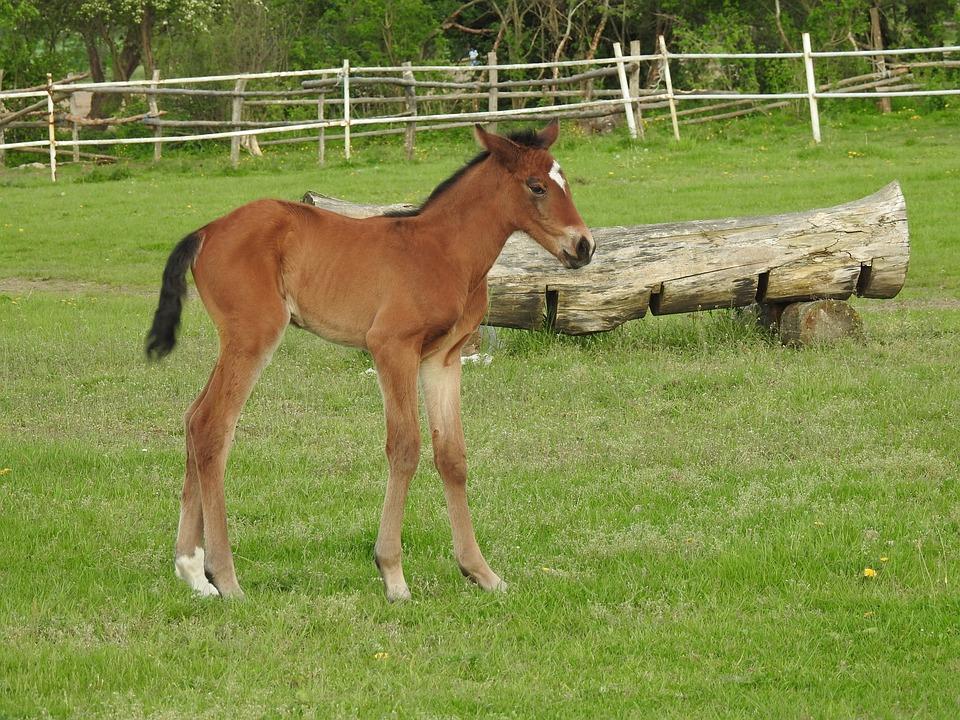 Mammals, Farm, Lawn, Pasture Land, Offspring, The Horse
