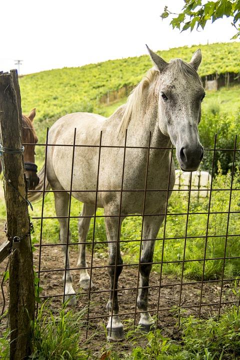 The Horse, Animal, Stallion, Ride, Pasture Land, Mare
