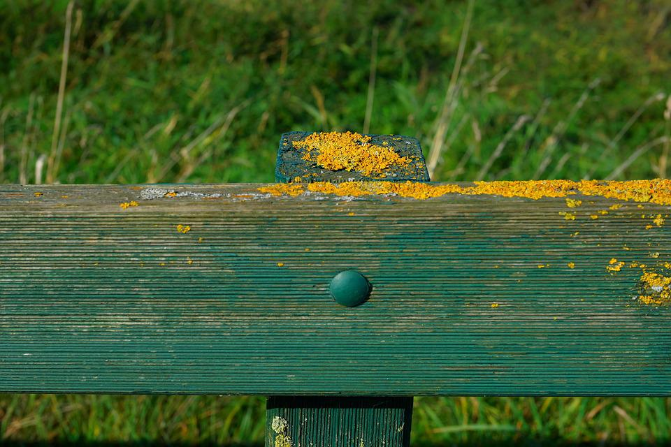 Fence, Pile, Moss, Pasture, Wood, Post, Fence Post