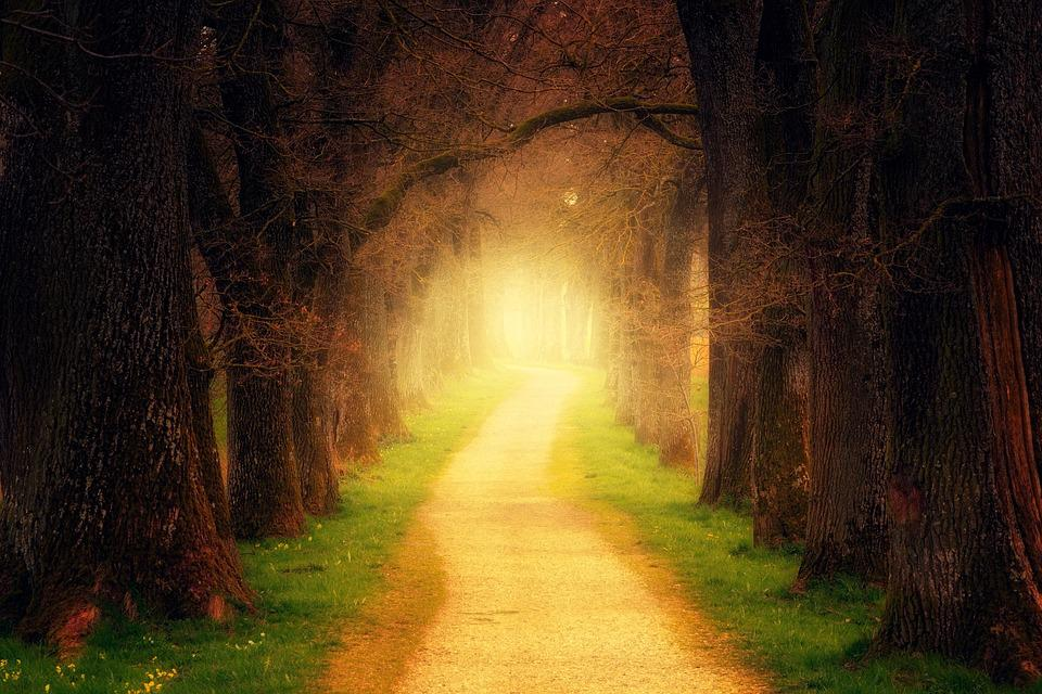 Tree, Forest, Path, Light, Away, Forest Path, Avenue